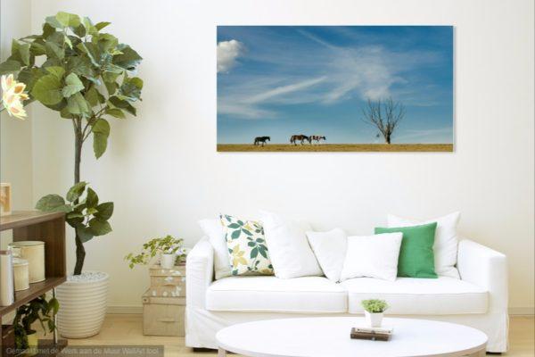 wanddecoratie, paard, boom, lucht, wolken, blauw, muur, foto, leuk, iets, ideeen, canvas, werk, print, hout, aluminium, digibond, woonkamer, kunst, online, shop, fotografie, Sven, Wildschut,