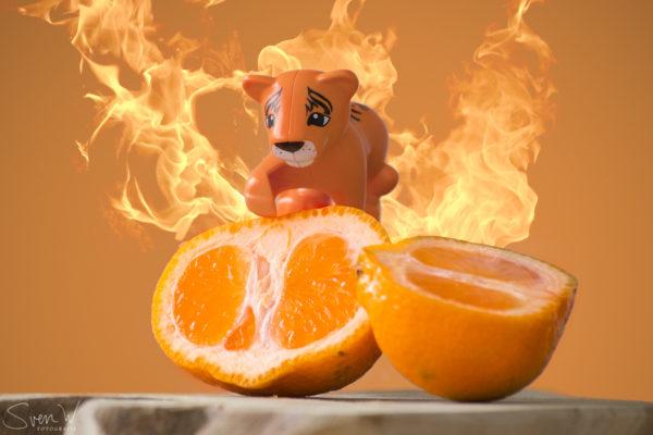 oranje, tijger, foto, 7 daagse,