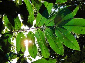 blad, tropisch, muur, sven, groen,